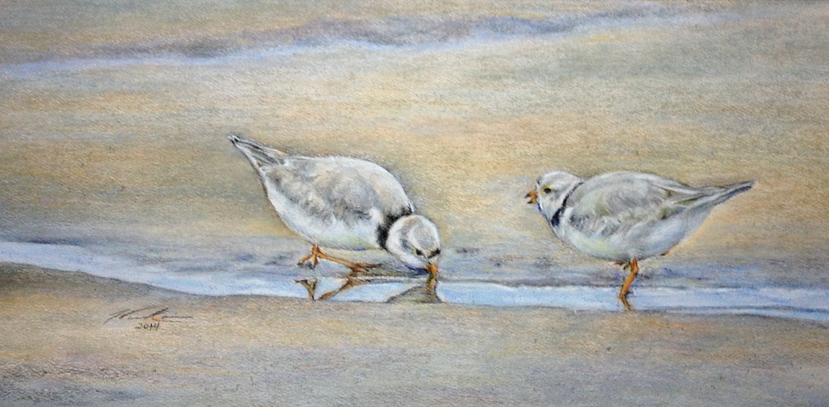 piping-plovers-1-20-15